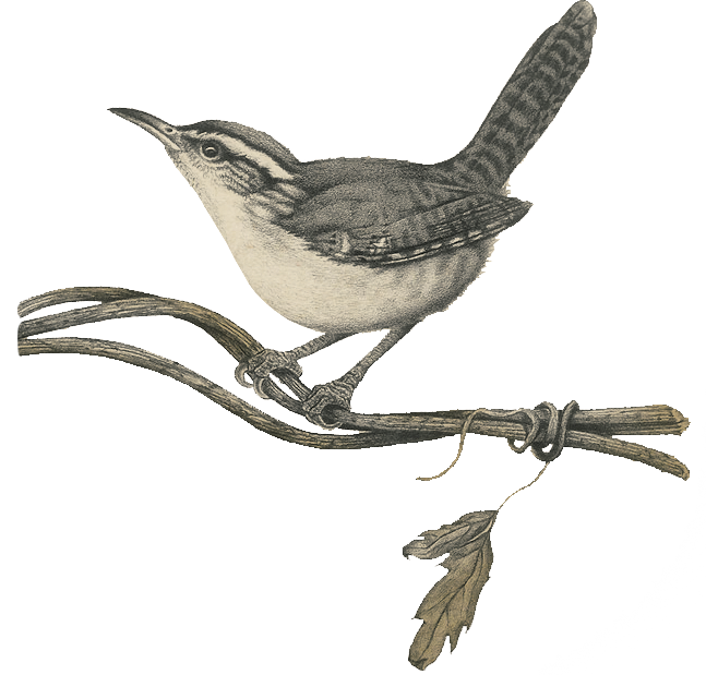 Hindiba Nature House  - Illustration Of The Bird